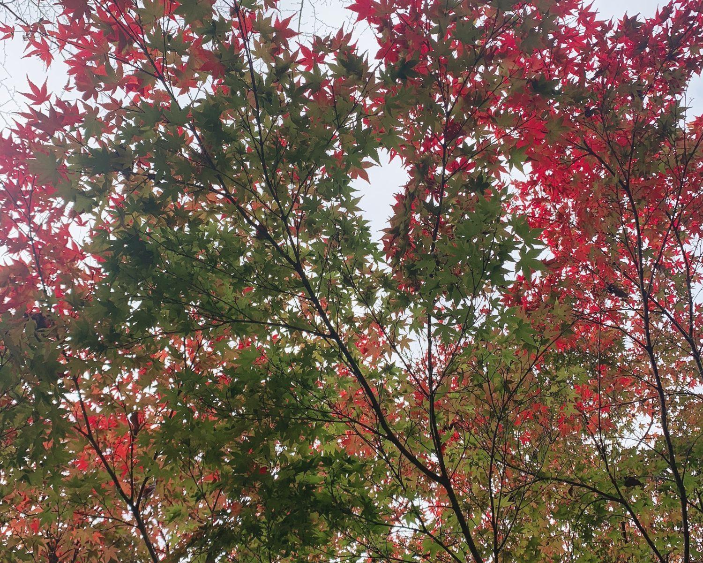 🍁秋も深まり・・